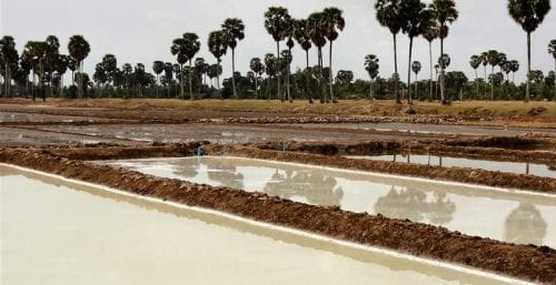 Sea Salt Of The Saltworks Of Kampot